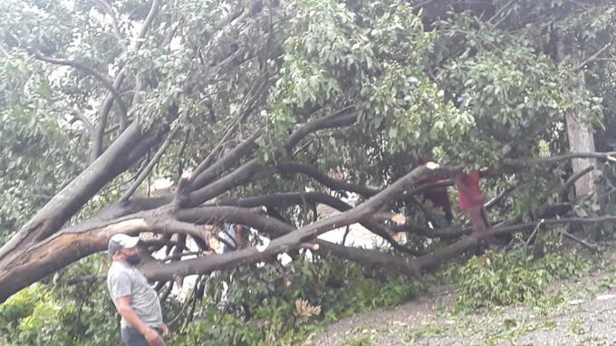 Fuertes vientos derriban árboles y plásticos de invernaderos en San José de Ocoa