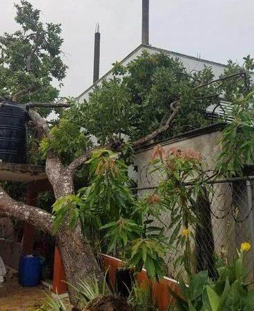 Árboles derribados, viviendas afectadas y fuerte oleaje en María Trinidad Sánchez